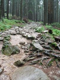 verblockter Trail